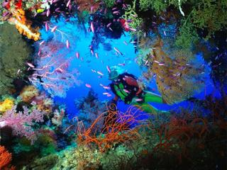 - 10 Dives on Bequia - Advanced -