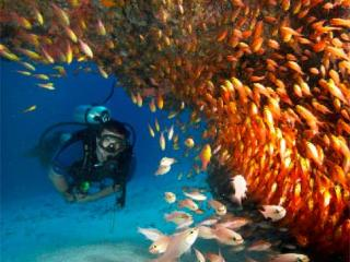 - 10 Dives on Bequia -