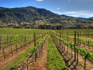 Perched above a vineyard and Osoyoos Lake, this resort offers rest, rejuvenation and fun.