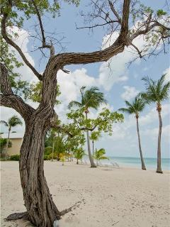 Cayman Kai Cayman Islands Vacation Rentals - Apartment
