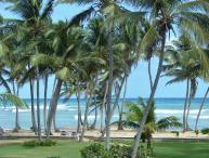 Rustling Palms