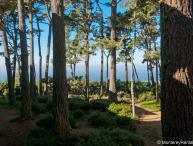Ocean Pines #30